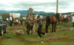 grigorescu_horse-market_02